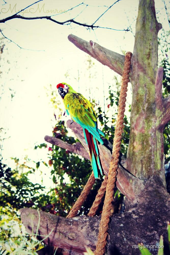 Macaw by megamonroe