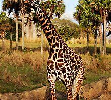 Giraffe by megamonroe