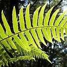 Sunlit Ferns by Jess Meacham