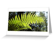 Sunlit Ferns Greeting Card