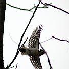 Downy In Flight by Carla Wick/Jandelle Petters