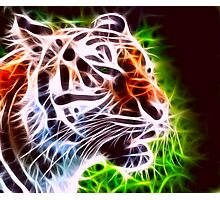 Fiery Tiger Photographic Print