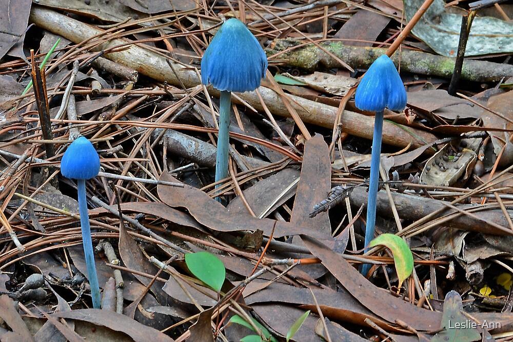 Blue Fungi  -  Entoloma Virescens by Leslie-Ann