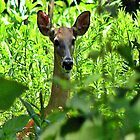 Doe by scott staley