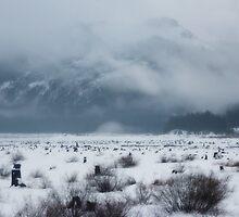 snow covered pass~ by Brandi Burdick