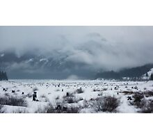 snow covered pass~ Photographic Print