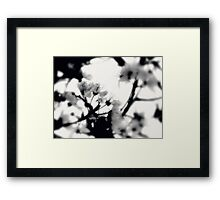 tranquility...two~ Framed Print