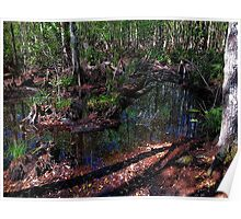 Morning Walk Through The Cypress Swamp Poster