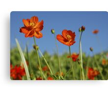 Red Cosmos Flower Canvas Print