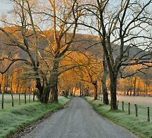 Springtime Morning on Sparks Lane - Cades Cove by JHRphotoART