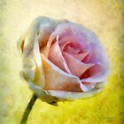 Shy Underneath by RC deWinter