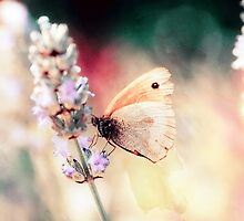 Butterfly on Lavender by Marc Loret