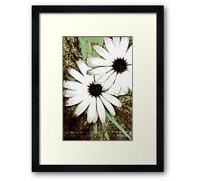 grungy daisys Framed Print