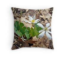 Bloodroot Wildflowers - Sanguinaria canadensis L Throw Pillow