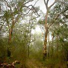 Morning mist, Hawkins Lookout ~ Wiseman's Ferry NSW by Rosalie Dale