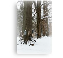 Maple Sugaring Time Canvas Print