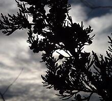 Cedar Branch by Dan Seeley