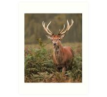 Majestic Red Stag Art Print