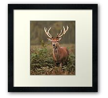 Majestic Red Stag Framed Print