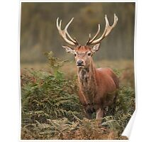 Majestic Red Stag Poster