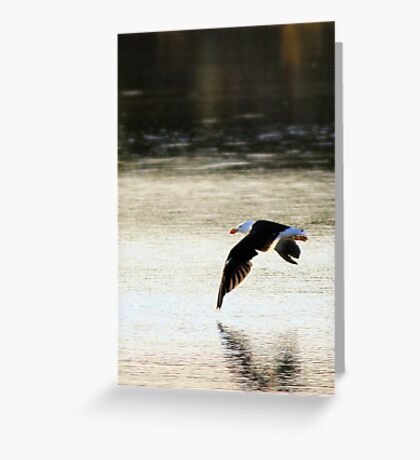 sunrise seabird Greeting Card