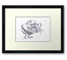 Smooth rock crab Framed Print