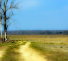 Mississippi Back Roads by Thomas Eggert
