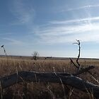 Kansas Landscape by Dan Seeley