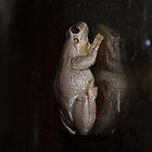frog by Paul Halley