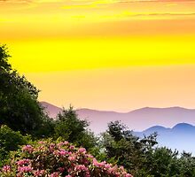 MOUNTAIN LAUREL SUNDOWN by Randy Branham