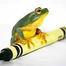 Green Frog on Crayon by Donna Rondeau