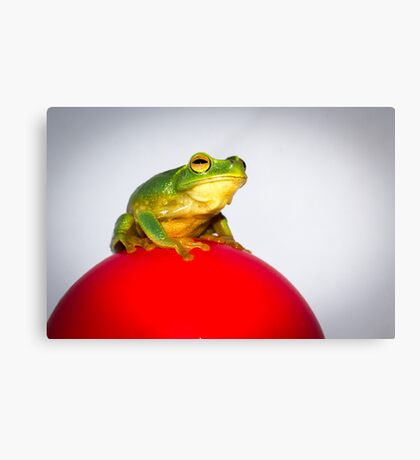 Frog on Red Ball Canvas Print