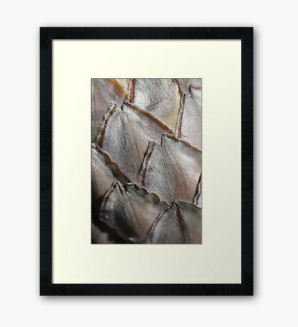 Protea Petals Framed Print