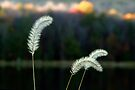 Autumn Lakeside Tall Grass by Gene Walls