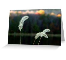 Autumn Lakeside Tall Grass Greeting Card