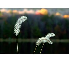 Autumn Lakeside Tall Grass Photographic Print
