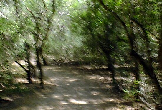 Recasa Trail by Bill Morgenstern