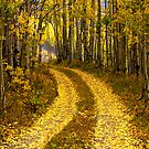 The Golden Road by Linda Eshom