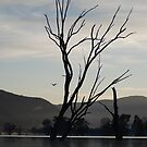 Tree & Pelican by unstoppable
