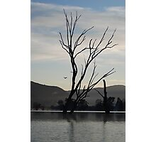 Tree & Pelican Photographic Print
