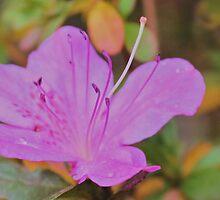 December Flower by aprilann