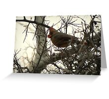Cardinal (Female) Candy Greeting Card