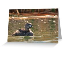Pied-billed Grebe (Breeding Adult) Greeting Card