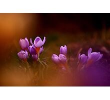 Photo of beautiful wild flowers Photographic Print