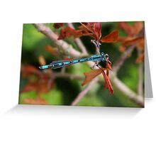 blue dragon fly Greeting Card