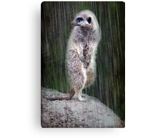 Who's turn for the lookout Canvas Print