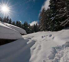 a ray of sunshine by Alessandra Antonini