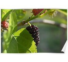 Sweet Mulberry Poster