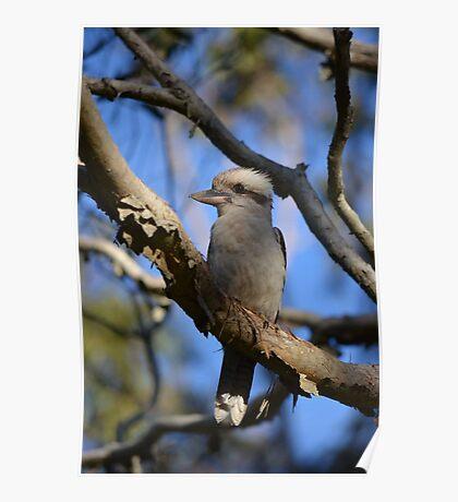 Kookaburra vigil 3 Poster