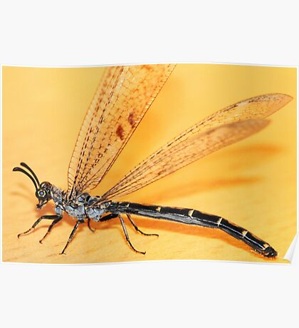 A damselfly stopped by... Poster
